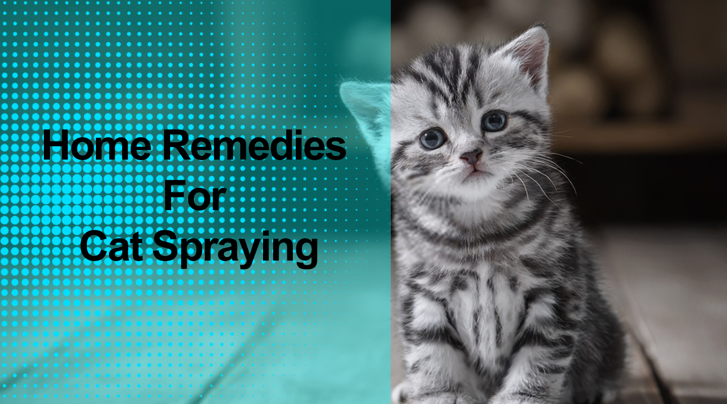 Home Remedies For Cat Spraying