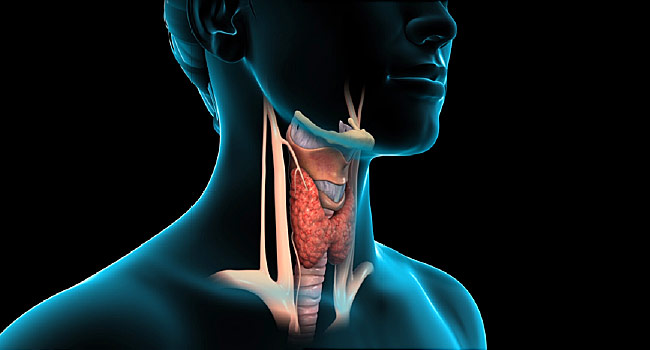 What Happens To Your Body After Thyroid Is Removed?