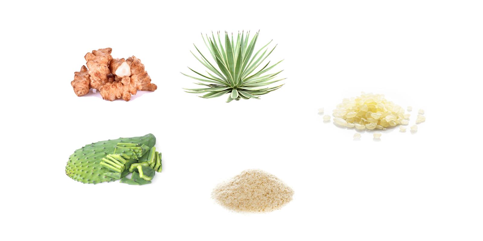 GoDaily prebiotic Ingredients