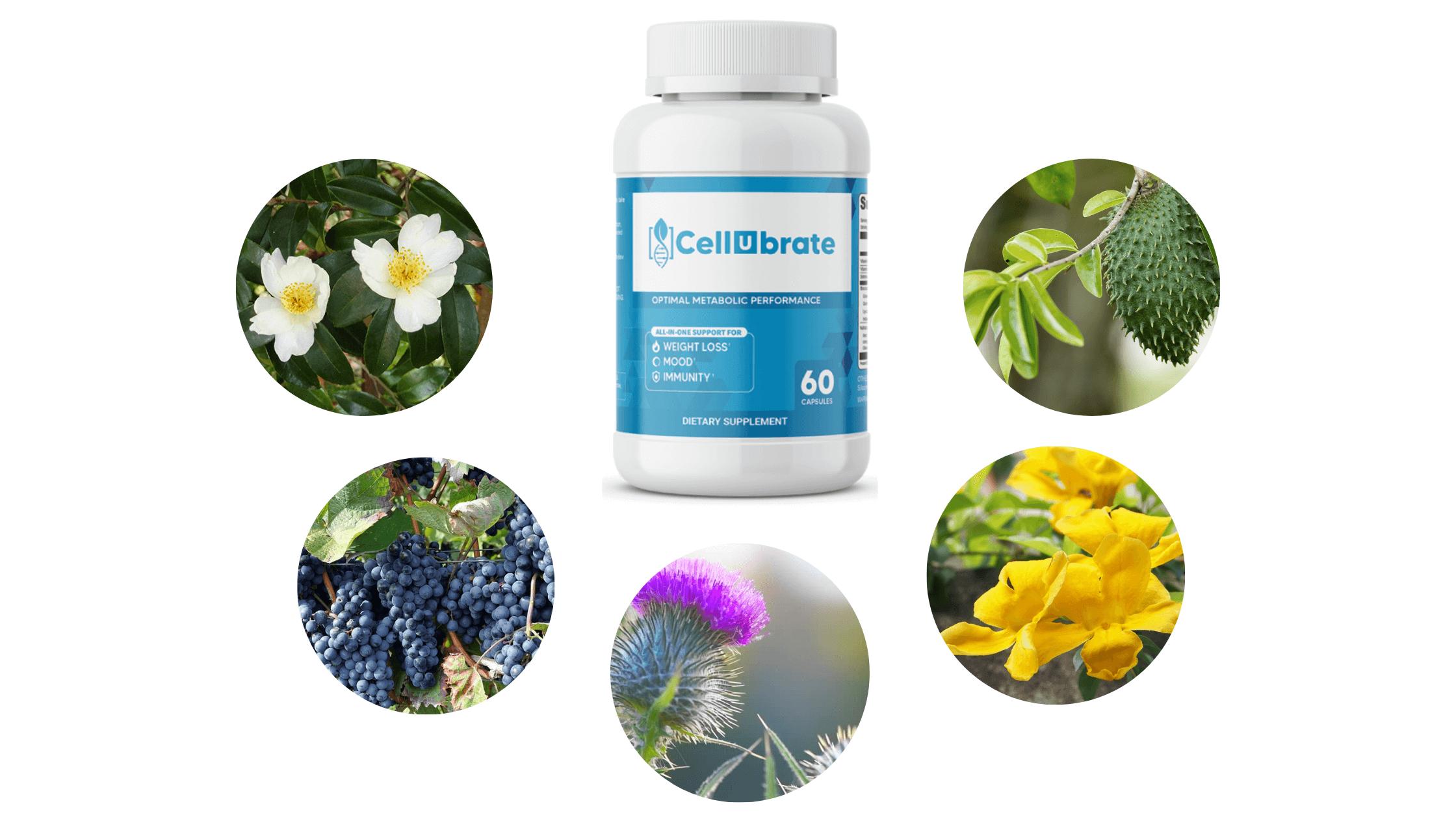 cellubrate capsule Ingredients